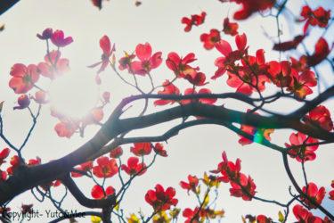 【バジル・レモンバームの種の蒔き方】ベランダ菜園でハーブ栽培